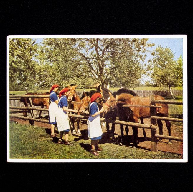 (Postcard) Reichsarbeitsdienst Weibliche Jugend (Hans Retzlaff)